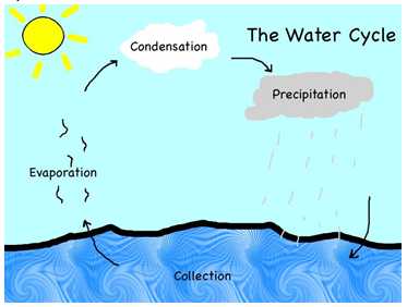 Course Environmental Science Class 3 Topic Water Cycle